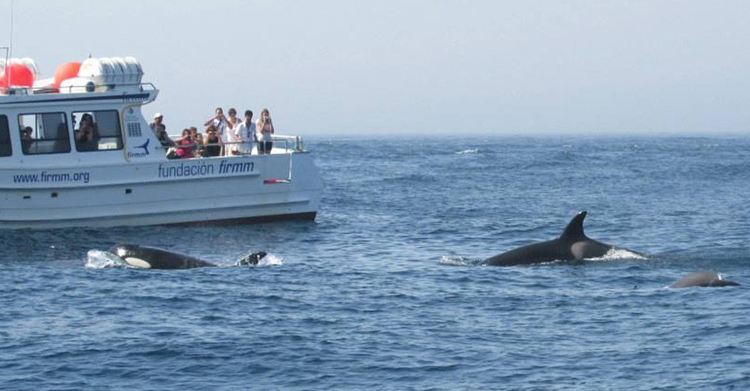 Costa del Sol lifestyle, whale watching
